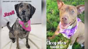 WXXV Pet of the Day: Spotlighting pets at local animal shelters [Video]