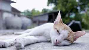 A Cat in Belgium Tested Positive for COVID-19 [Video]
