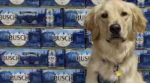 Get 3 Months of Free Busch Beer for Adopting or Fostering a Dog [Video]