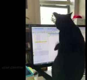 Cat interrupts owners from work at home under U.S. lockdown [Video]