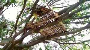 Coronavirus: Treehouse isolation for some in India [Video]