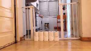 Toilet Paper Stacked to High for Doggo [Video]