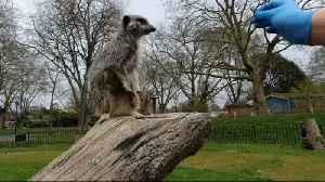 London Zoo's 'behind the scenes' diaries during coronavirus shutdown [Video]
