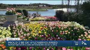 Proud 2 Be OK: Tulsa Botanic Garden Donates Freshly Cut Tulips to Hospital Workers, Patients [Video]