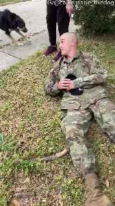 Dad and Dog Reunion After Military Training [Video]