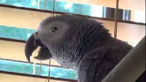 Hungry parrot and his owner are looking forward to eating [Video]