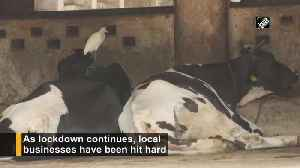 Cowsheds face shortage of food supply amid lockdown in Mumbai [Video]