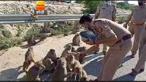 बरेली : भूखे-प्यासे बंदरों-कुत्तों को डीआईजी ने ख� [Video]