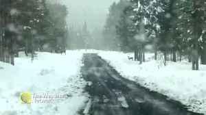 Deer crossing ahead on this snowy road [Video]