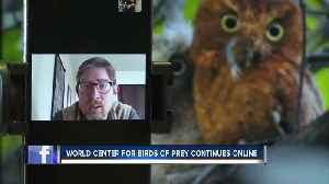World Center for Birds of Prey moves to online demonstrations [Video]