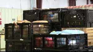 Nettleton food pantry closes amid Coronavirus outbreak [Video]