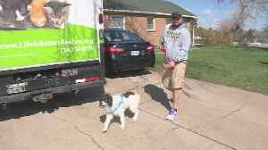 Rescue Organization Helps At-Risk Pets Find Foster Homes During Coronavirus Pandemic [Video]
