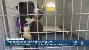 Ducey issues order allowing veterinarians to examine pets, animals through telemedicine [Video]