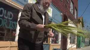 Retired florist gives away hundreds of palm leaves for Palm Sunday [Video]