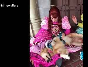 Heartwarming moment service dog in Disney World meets Cinderella's step sisters [Video]