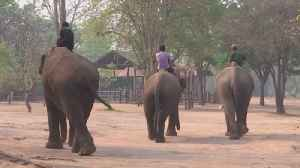 Taiwanese Elephant Camp Worried It Won't Be Able to Feed Elephants During Coronavirus Pandemic [Video]