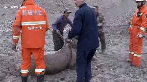 Firefighters rescue 18 horses trapped in mire in northern China [Video]