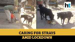 Gurugram: How this British couple is helping stray canines amidst lockdown [Video]