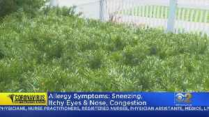 Spring Allergy Symptoms Can Look Like COVID-19 Symptoms; Here's The Difference [Video]