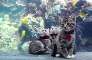 'Purrfect field trip' – shelter kittens visit U.S. aquarium closed to visitors [Video]
