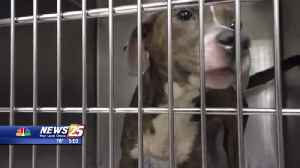 Humane Society of South Mississippi temporarily closes adoptions [Video]