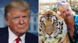 President Trump on Joe Exotic Pardon: Will 'Look Into It' | THR News
