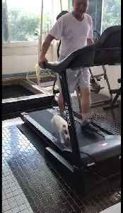 Treadmill walkies for dog and owner during COVID-19 lockdown in Thailand [Video]