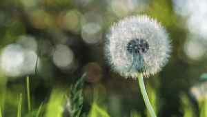 How Getting Your Allergies in Check Could Help Lower Your Risk of COVID-19 [Video]