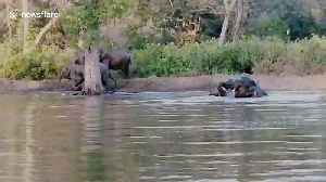 Elephants go for a swim as temperature soars in northern India [Video]