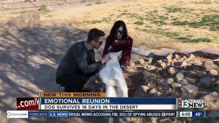 Las vegas dog survives 16 days in the desert one news for Dog days las vegas
