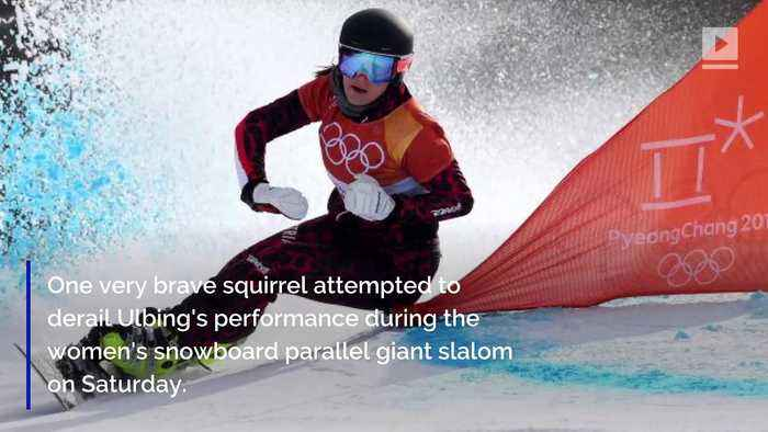 Olympic Snowboarder Daniela Ulbing Almost Runs Over Squirrel During Event