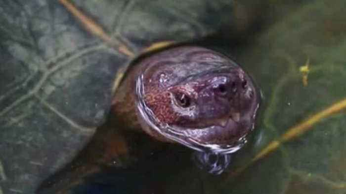 Teacher who fed puppy to snapping turtle in front of students under investigation