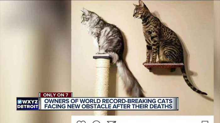 Owners of record-breaking cats lost in fire talk about grief, raising funds