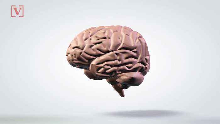 Start-Up Offering to Preserve & Upload Your Brain, But There's a Catch