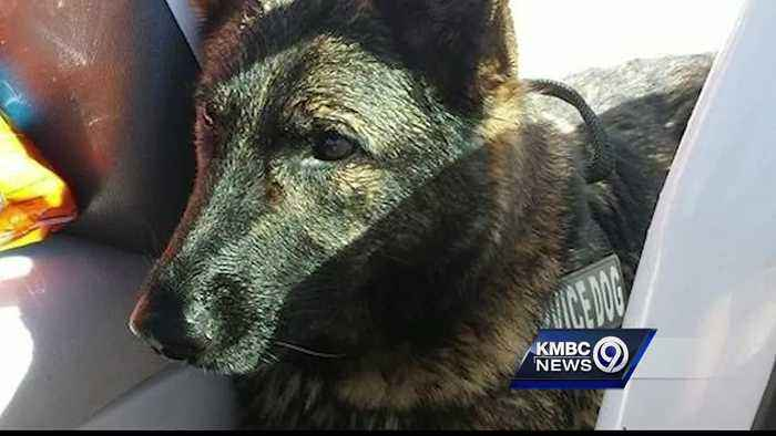 Family wants answers from United after dog due in Kansas City ends up in Japan