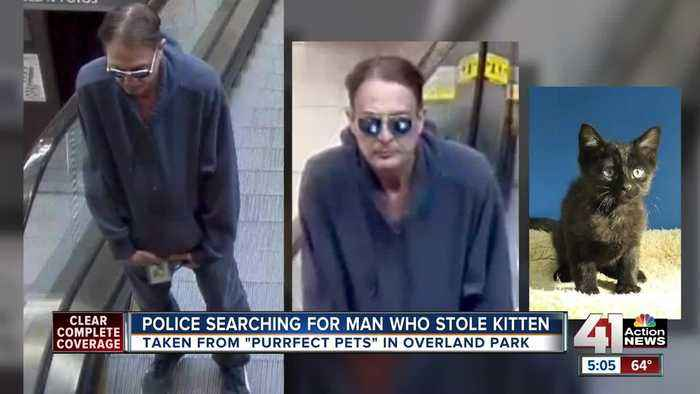 News video: Overland Park police looking for alleged 'Catnapper'