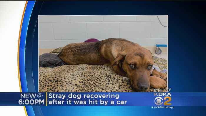 Family Seeks Donations For Injured Dog
