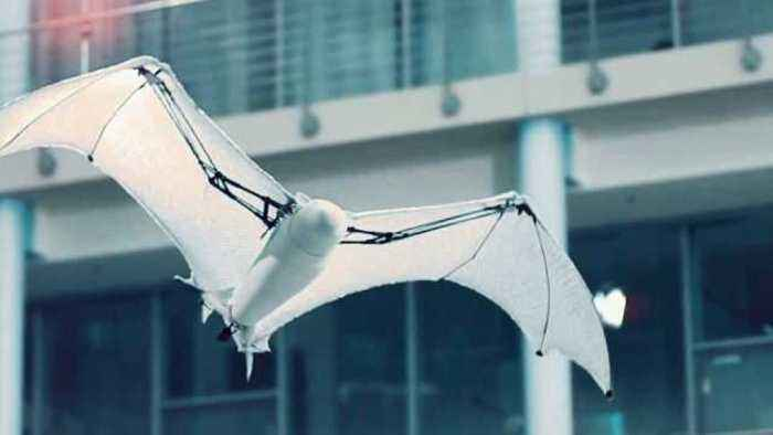 Bionic flying fox shows off its aerial agility