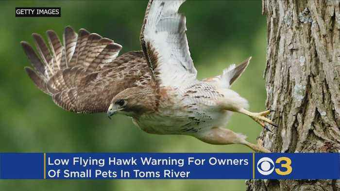 Jersey Shore Town Issues Warning After Low-Flying Hawks Spotted