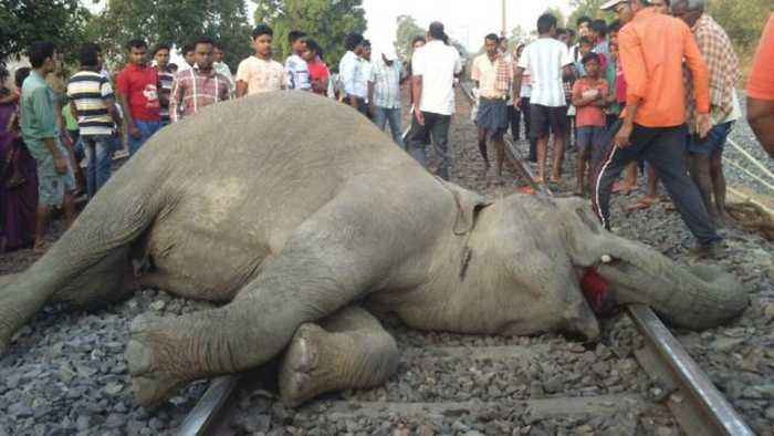 Tragic moment three wild elephants and calf run over by speeding goods train in India while crossing railway line in search of f