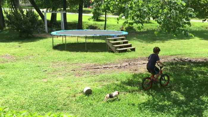 "News video: ""Boy Plays Outdoors With His Pet - A Mini Pig"""
