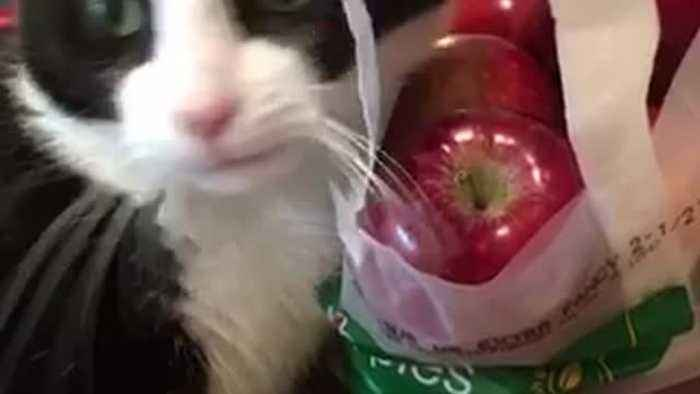 News video: Cat plays with bag of red apples