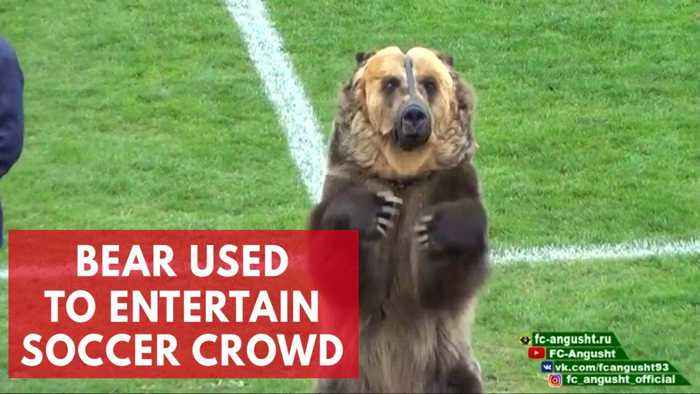 Performing bear used to entertain crowds at Russian Soccer match