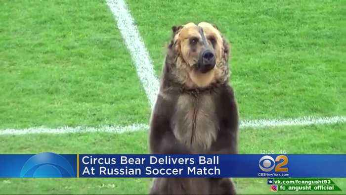 News video: Circus Bear Kicks Off Soccer Match