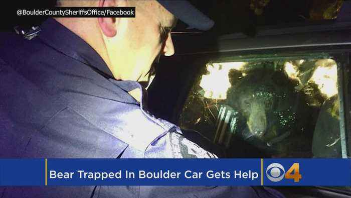 News video: Deputies Help Bear Locked In Car