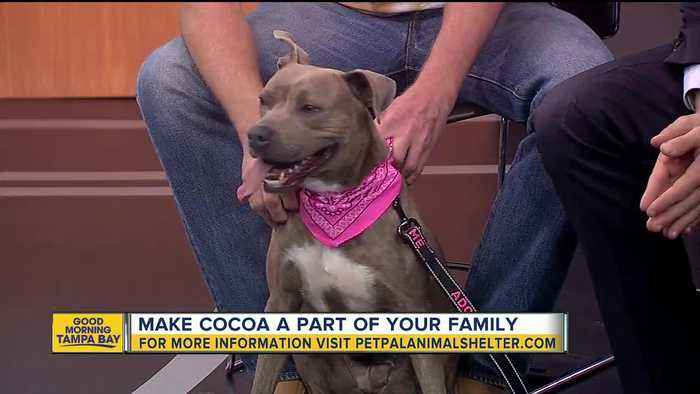 News video: Pet of the week: 2-year-old Cocoa is a cool canine with a heart of gold