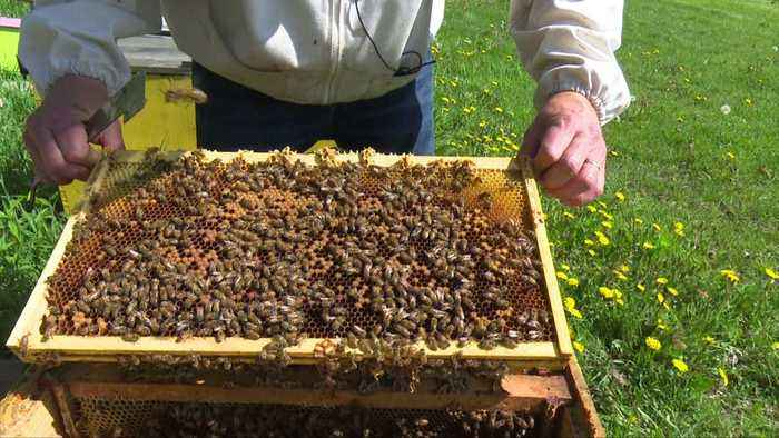 News video: Bee Swarm Season is Here, But Expert Warn Against Killing Them