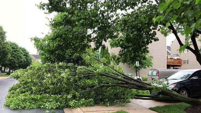 Viral Video Shows Why You Should Not Stand Under A Tree During Thunderstorms