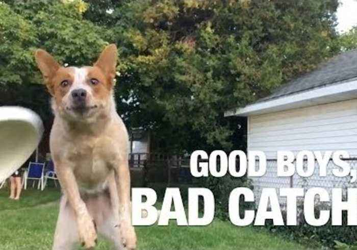 Adorable Dogs Just Can't Catch Anything