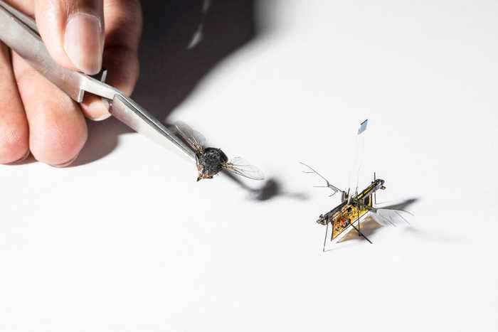 Researchers have finally managed to cut the cord on robotic flies